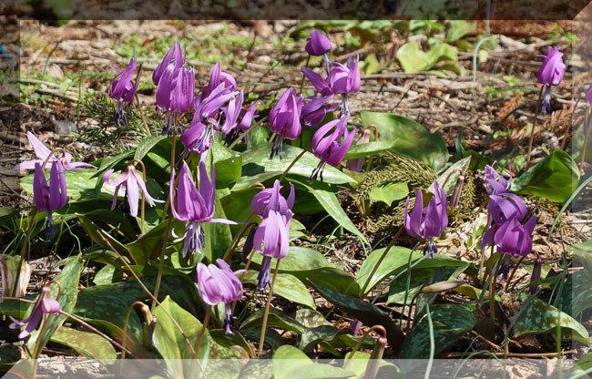 春の妖精_d0162994_08384913.jpg
