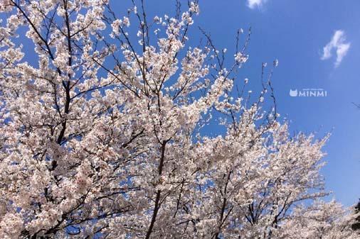 今日も暖かいですね♪ヽ(^o^)丿_c0140599_12411912.jpg