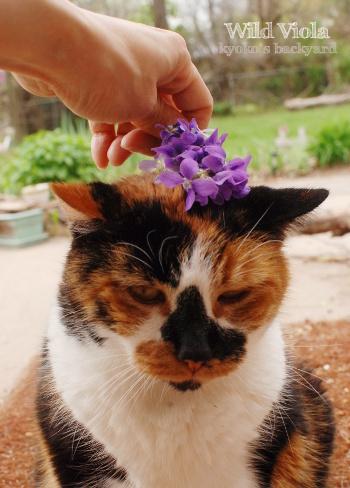スミレの花飾りと隊長_b0253205_02521483.jpg