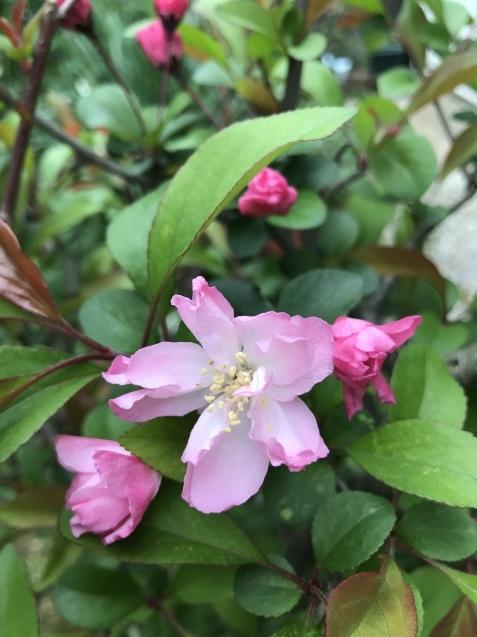 春の花_b0061107_23214530.jpeg