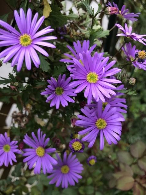 春の花_b0061107_23242367.jpeg