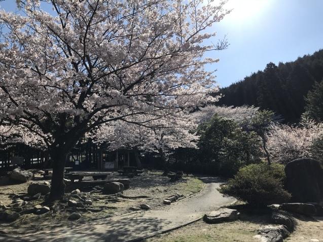 桜_b0061107_23332554.jpeg