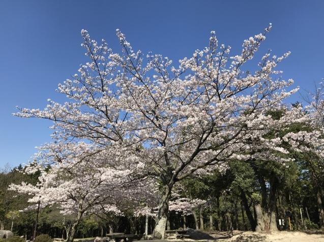 桜_b0061107_23334896.jpeg