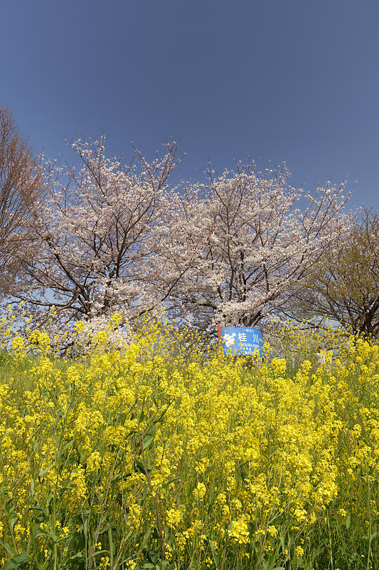 f0032011_20105740.jpg