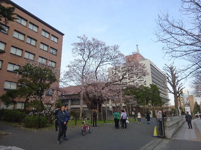 石割桜が開花しましたね。_f0105112_18204782.jpg