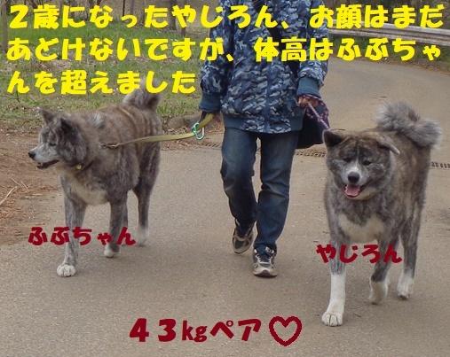 f0121712_00261498.jpg