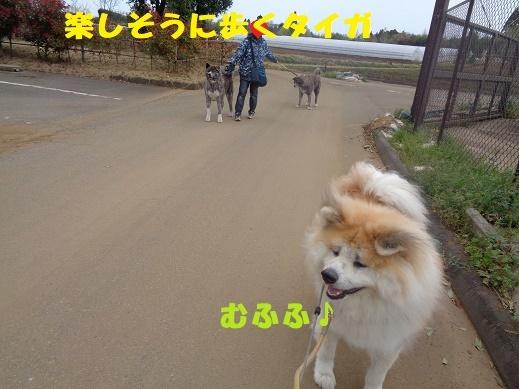 f0121712_00263414.jpg