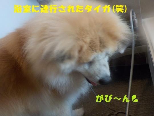 f0121712_00382837.jpg