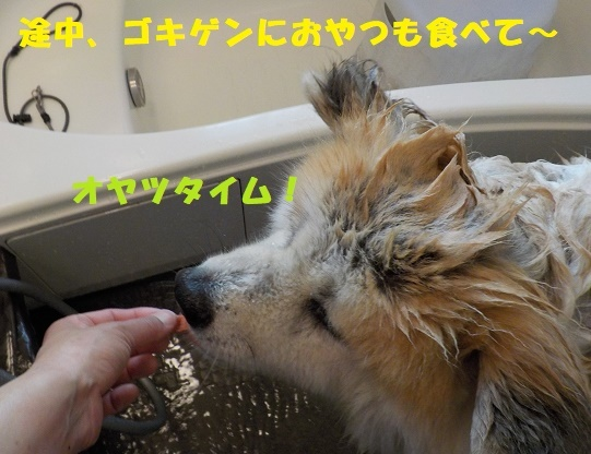 f0121712_00565553.jpg