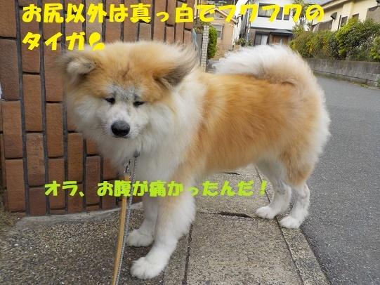 f0121712_01125509.jpg