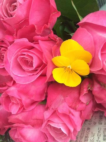 黄色いちょうちょ_e0141819_07223206.jpg