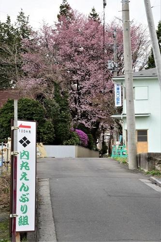 岩泉町のはくもくれん_c0299631_17385959.jpg