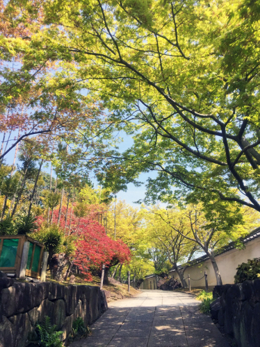 門と春とかんちゃんと_f0045132_08503053.jpg