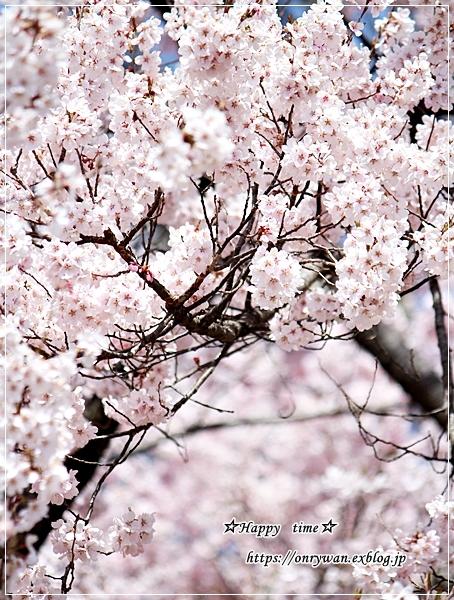肉団子弁当と伊那・高遠城の桜♪_f0348032_16462845.jpg