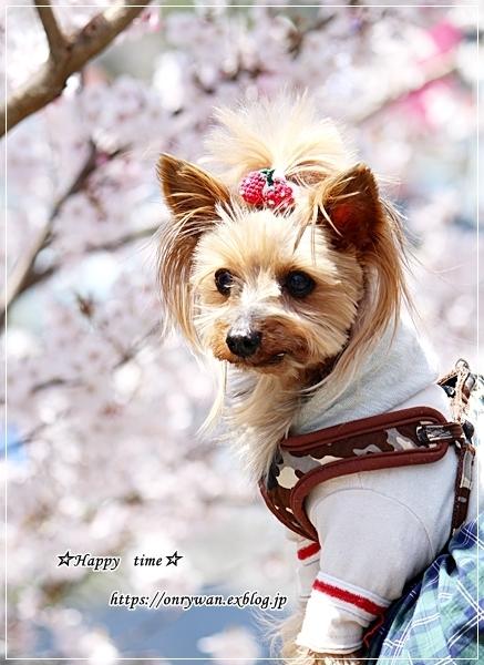 肉団子弁当と伊那・高遠城の桜♪_f0348032_16463754.jpg