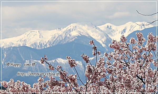 肉団子弁当と伊那・高遠城の桜♪_f0348032_16464534.jpg