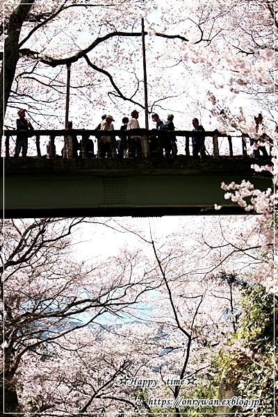 肉団子弁当と伊那・高遠城の桜♪_f0348032_16470416.jpg