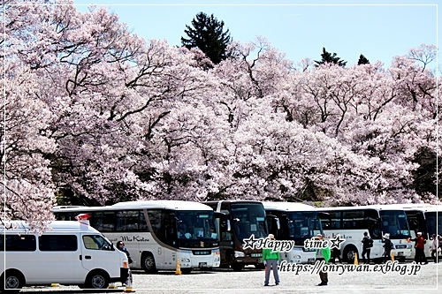 肉団子弁当と伊那・高遠城の桜♪_f0348032_16473971.jpg
