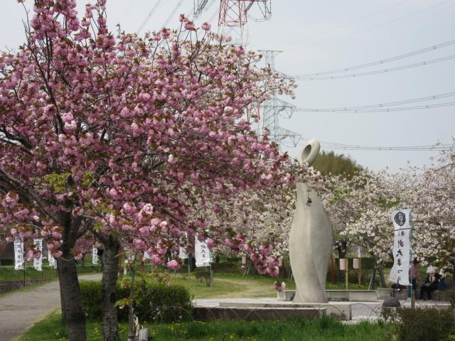 満開の八重桜「於大のみち」_d0247833_13544810.jpg