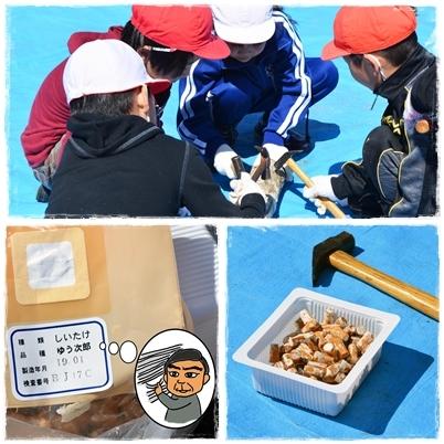 鮭稚魚放流会とシイタケ植菌体験なのだ!_c0259934_10511084.jpg