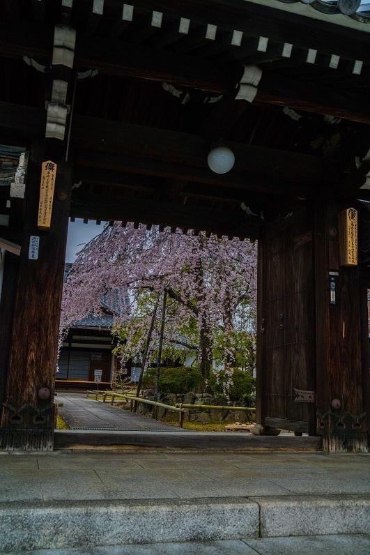 2019京都桜~上品蓮台寺の枝垂れ桜_e0363038_14222349.jpg