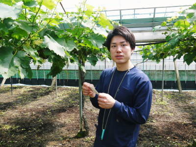 熊本ぶどう 社方園 今年も順調に花が咲きました!花セットの様子と匠の技を学ぶ研修生の話(前編)_a0254656_18401553.jpg