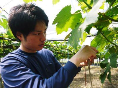 熊本ぶどう 社方園 今年も順調に花が咲きました!花セットの様子と匠の技を学ぶ研修生の話(前編)_a0254656_18573139.jpg