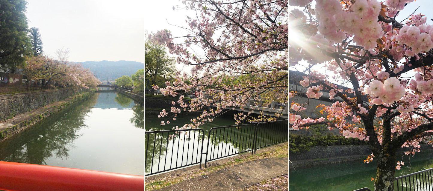 2週間以上、景色はサクラ一色でしたが…_b0215856_10564114.jpg