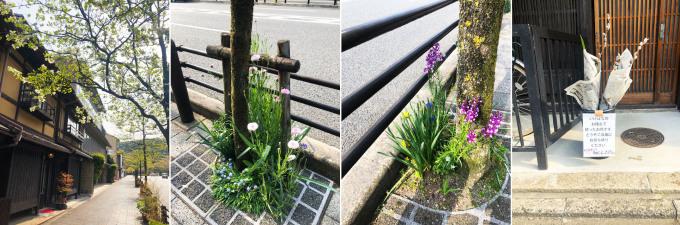2週間以上、景色はサクラ一色でしたが…_b0215856_10571402.jpg