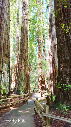 Spring Break in Muir Woods, CA スプリングブレイク in ミュアウッズ_e0253364_20170022.jpg