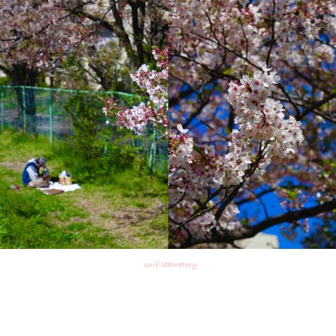 お花見 2019(まさかのPart3)_c0156468_17275801.jpg