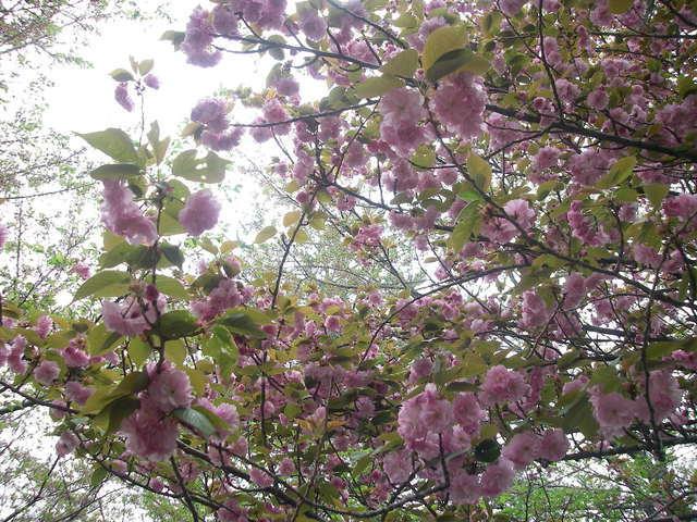 また、春の景色_a0074069_16180694.jpg