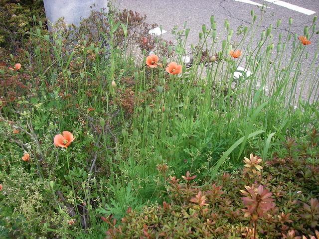 また、春の景色_a0074069_16310266.jpg