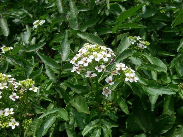 また、春の景色_a0074069_16312194.jpg