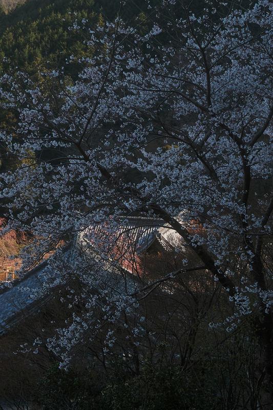 桜 2019_f0021869_23503560.jpg