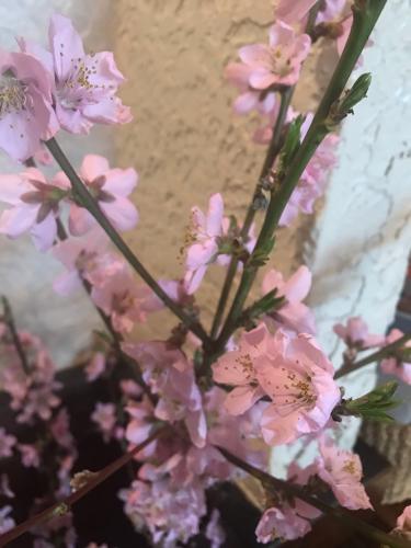 桃の木には桃が_d0144871_07592060.jpg