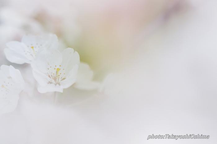 桜撮影会_f0361287_19541695.jpg