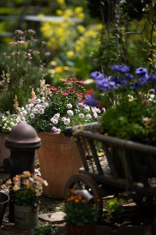 春から初夏へ移ろう英国庭園_d0353489_00172603.jpg