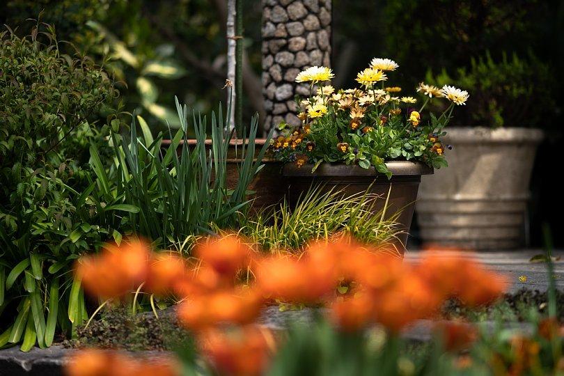 春から初夏へ移ろう英国庭園_d0353489_00174677.jpg