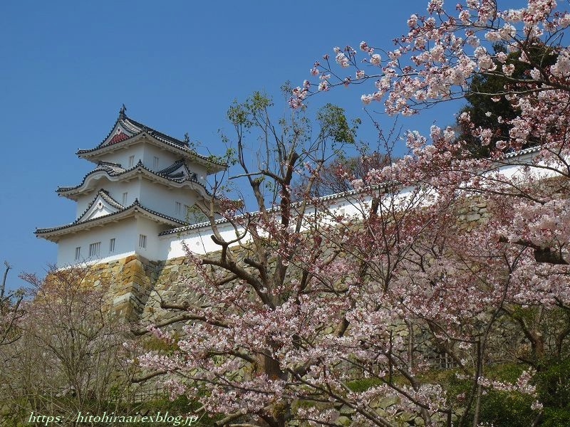 明石城と桜_f0374092_17423462.jpg