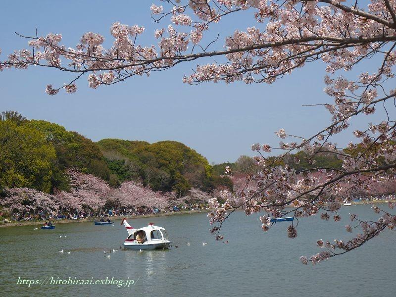 明石城と桜_f0374092_17523823.jpg