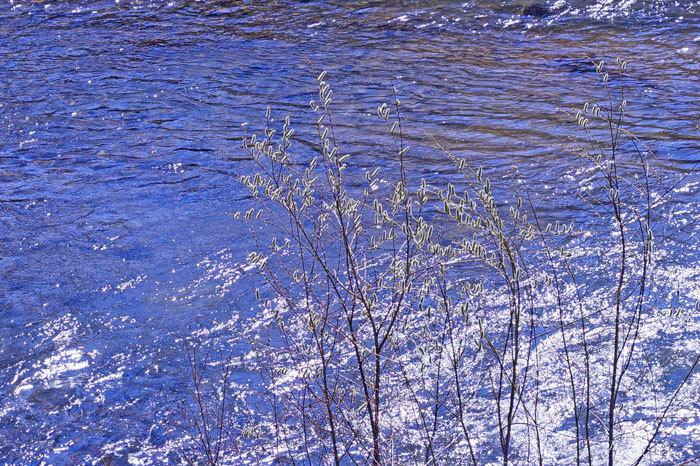 川沿いの散歩コース_d0162994_08204173.jpg