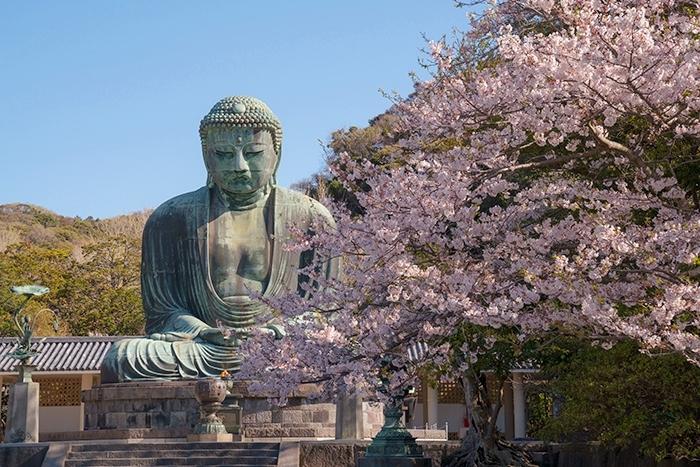 鎌倉大仏と桜_b0145398_18342692.jpg