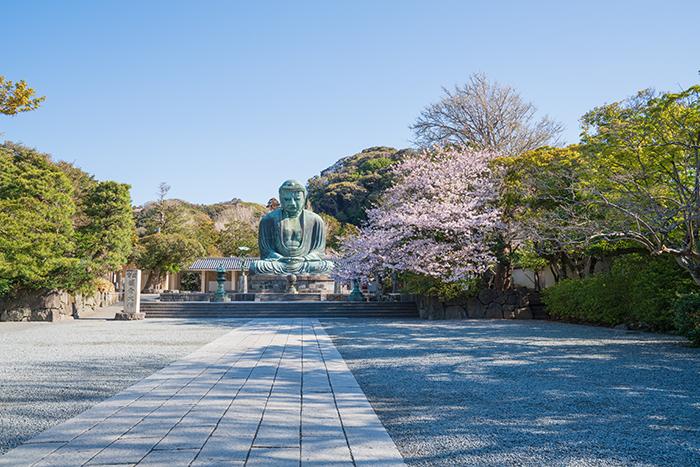 鎌倉大仏と桜_b0145398_18344818.jpg