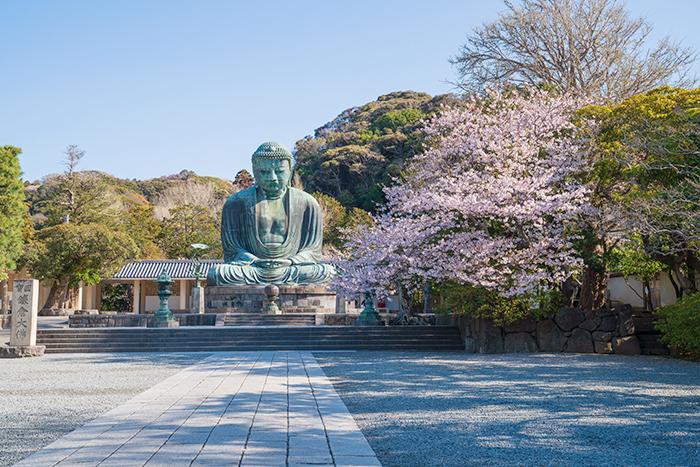 鎌倉大仏と桜_b0145398_18355762.jpg