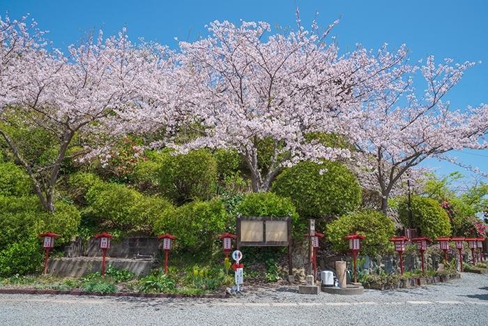 大船観音寺と桜_b0145398_18544699.jpg