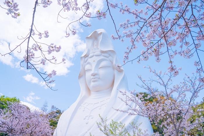 大船観音寺と桜_b0145398_18565456.jpg
