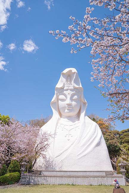 大船観音寺と桜_b0145398_19002672.jpg