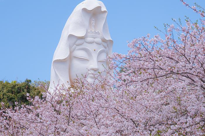 大船観音寺と桜_b0145398_19010492.jpg
