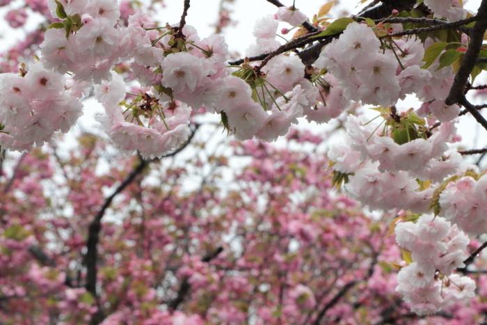葉かげに垂れて咲く…_f0083400_22353438.jpg